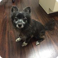 Adopt A Pet :: Penelope - New Orleans, LA
