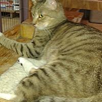 Adopt A Pet :: Janet - Whittier, CA