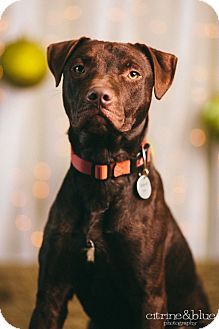 German Shorthaired Pointer Mix Dog for adoption in Portland, Oregon - Deebo