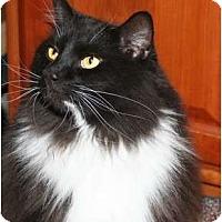 Adopt A Pet :: Bogart - Cincinnati, OH