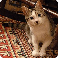 Adopt A Pet :: Willy - Bedford, MA