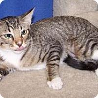 Adopt A Pet :: K-Lori1-Ying - Colorado Springs, CO