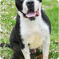Adopt A Pet :: Underdog - Chicago, IL