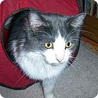 Adopt A Pet :: Mitzi - College Station, TX