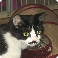 Adopt A Pet :: JAZZABELLE - 2014 - Hamilton, NJ