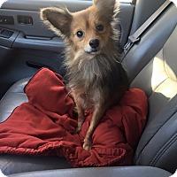Adopt A Pet :: Copper - Russellville, KY
