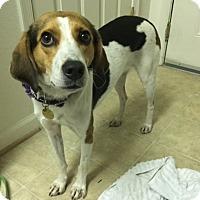 Adopt A Pet :: Nimmy - Richmond, VA