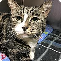 Adopt A Pet :: Nova - Toledo, OH