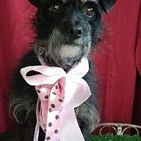Adopt A Pet :: LEYLA - Corona, CA