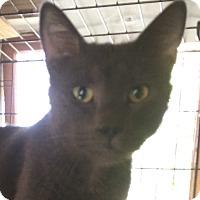 Adopt A Pet :: Les Paul - Cocoa, FL