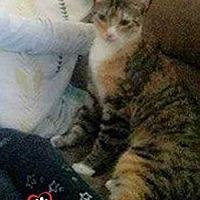 Adopt A Pet :: Sweet Suzie - Council Bluffs, IA