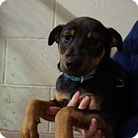 Adopt A Pet :: Izac - Oviedo, FL