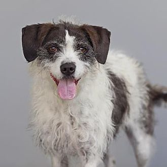 Mixed Breed (Medium) Mix Dog for adoption in Mission Hills, California - Bella
