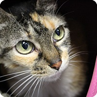 Adopt A Pet :: Squirt - Martinsville, IN