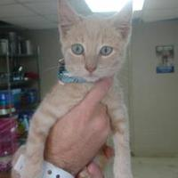 Adopt A Pet :: Neyland - Russellville, KY
