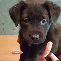 Adopt A Pet :: Maggie - Jay, NY