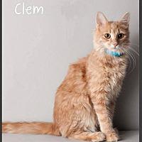 Adopt A Pet :: Clem - Gilbert, AZ