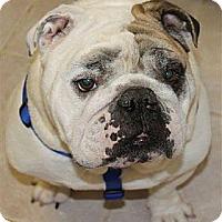 Adopt A Pet :: Rudolph - Winder, GA