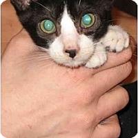 Adopt A Pet :: Georgiou - Davis, CA