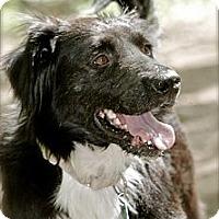 Adopt A Pet :: Roger - Hastings, NY