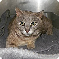 Adopt A Pet :: Harmony - Dover, OH