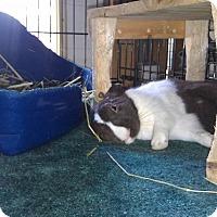 Adopt A Pet :: Wompa - Williston, FL