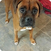 Adopt A Pet :: Maz - Reno, NV