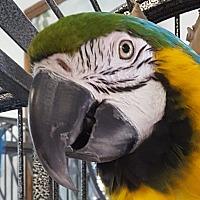 Adopt A Pet :: Sam - Grandview, MO