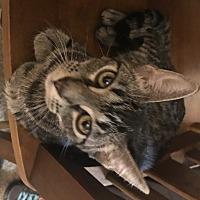Adopt A Pet :: Julle - Glenwood, MN