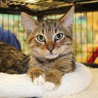 Adopt A Pet :: Kakes - McCormick, SC