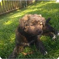 Adopt A Pet :: Molly - Inglewood, CA
