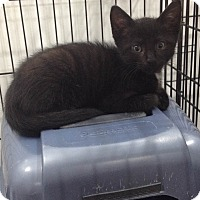Adopt A Pet :: James - Speonk, NY