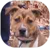 Terrier (Unknown Type, Medium) Mix Dog for adoption in Eatontown, New Jersey - Buster