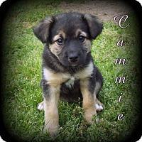 Adopt A Pet :: Cammie - Denver, NC