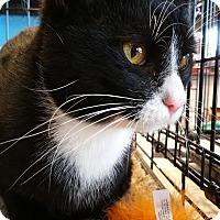 Adopt A Pet :: Jeeves - Burlington, NC
