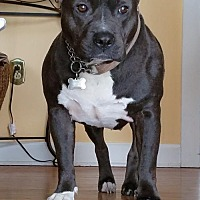 Adopt A Pet :: Nyx - Birdsboro, PA