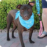 Adopt A Pet :: BULLY - Las Vegas, NV
