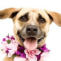 Adopt A Pet :: ISIS - Orlando, FL