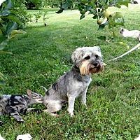 Adopt A Pet :: 'B' - WOODSFIELD, OH