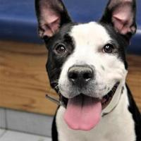 Adopt A Pet :: Dolly - Buffalo, NY