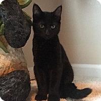 Adopt A Pet :: Monkey - Boise, ID