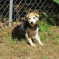 Adopt A Pet :: Nana - Muskegon, MI