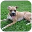 Photo 3 - Boxer Dog for adoption in Jacksonville, Florida - Biscuit