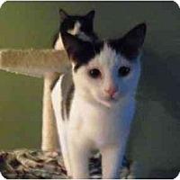 Adopt A Pet :: Lucky - Warren, MI
