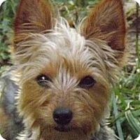 Adopt A Pet :: Molly - Wright City, MO