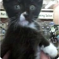 Adopt A Pet :: Jake - Jacksonville, FL