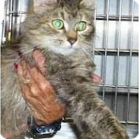 Adopt A Pet :: Weetie - Chesapeake, VA