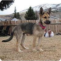 Adopt A Pet :: Bandit - Hamilton, MT