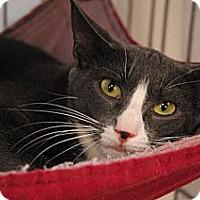 Adopt A Pet :: Fancy - Lunenburg, MA