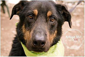 German Shepherd Dog Mix Dog for adoption in Lago Vista, Texas - Colt
